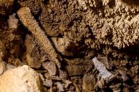 Jaskinia Zawał-8