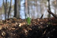 Wiosenne eksploracje na Jurze 03/04.2015